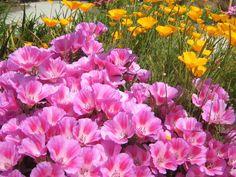 Посев цветов в апреле осуществляют прямо в грунт, что освобождает цветовода от лишних хлопот, а цветы – от пересадочного стресса. Мы составили подборку лучших однолетних для этих целей. 1. Георгины …