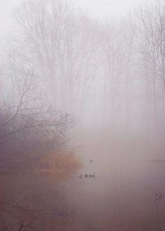 Forest photograph autumn home decor fall photography fog nature wall art purple… Misty Day, Techno, All Nature, Photo Tree, Samhain, Autumn Home, Landscape Photography, Dreamy Photography, Photography Tips