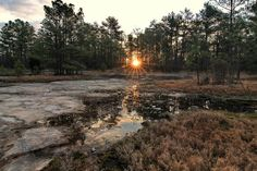 Davidson-Arabia Mountain Nature Preserve Dekalb County. Photo by 65mb via Flickr.
