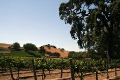 """Santa Barbara County captured the attention of the country as a wine country destination when the movie, """"Sideways"""" was released. Much of the movie was filmed on location in #Santa Barbara County."""