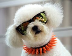 Happy Hump Day! Get through the week with adorable animals in ...