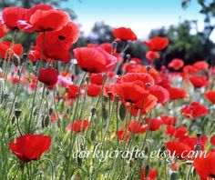 Red Poppy seeds  TX native wildflower seeds  free by Corkycrafts Poppies are one of my favorite flowers