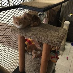 """My work has a """"cat library"""". You can """"check out"""" a cat to take back to your desk for an hour. The kitties are the newest additions to the """"library""""!"""