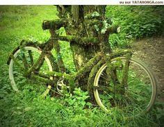 #Mosses - Nice Ride http://www.gardenoohlala.com