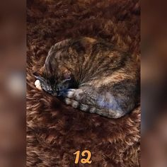 """Yvonne Hammer on Instagram: """"Sometimes, the smallest cats take up the most room in your heart ✨🤍 #hyresilienz #leben #lieben #lachen #chillen #genießen #tiere"""" Small Cat, Your Heart, Photo And Video, Cats, Room, Animals, Instagram, Bedroom, Gatos"""