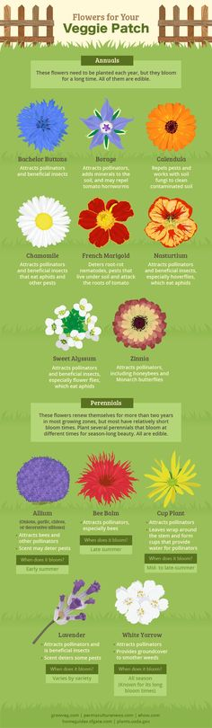 Flowers for garden companion planting and the bees                                                                                                                                                                                 More
