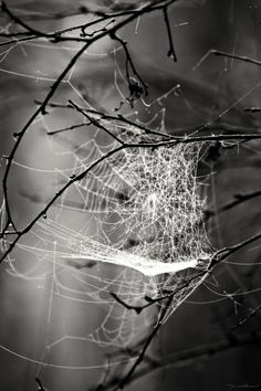 ^A Tangled Web we Weave