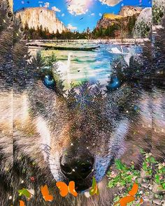 Waterfall Scenery, Rose Flower Wallpaper, Animated Love Images, Military Girl, Wolf Howling, Beautiful Gif, Animation, Flowers, Gifts