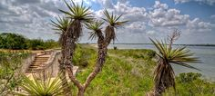 Offering a placid lake and one of the last remaining strands of South Texas brush country, this park offers unsurpassed swimming, boating and fishing.