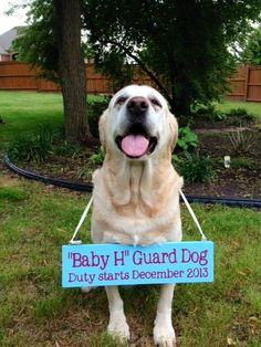 Pregnancy Announcement #TooCute