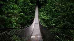 Forests-bridges-natural-scenery HD Wallpapers