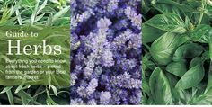 Herbs galore! Recipes, creative ideas, and more - all on herbs, from a great company