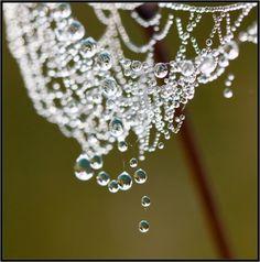 bella102:  Drops