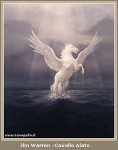 Risultati Immagini Per Cavallo Arabo Cavallo Alato Pinterest