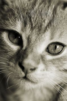 """Kittens carry tickles on their whiskers."" --Author Unknown"