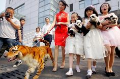 Latest Chinese Fashion Craze: Fantasy Animals Painted Dogs – Tigers, Pandas, Camels, Clowns   Artopia 444: Art Music Photos News Culture Video