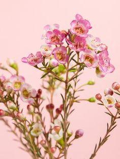 Wicken, Spring Flowers, Wax, Classic, Painting, Violet, Recherche Google, Gardens, Wax Flowers