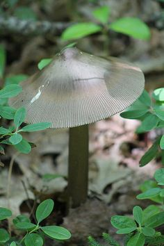 Unknown Fungi | Photographed at Trexler Scout Reservation, J… | Flickr