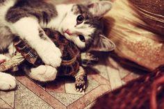 cat <3 turtle