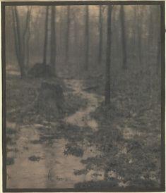Woods Interior by Edward Steichen Edward Steichen, Vintage Nature Photography, Landscape Photography, Art Photography, Fine Art Photo, Photo Art, Connecticut, Alfred Stieglitz, Wood Interiors