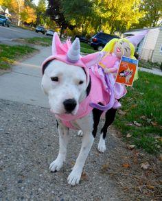 Chicka-corn! American Staffordshire terrier, amstaff, unicorn.