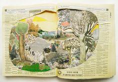 Anne Percoco - Field Studies