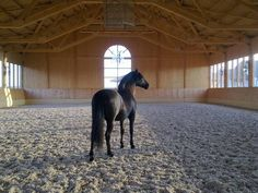 My horse would look nice in here! Horse Arena, Horse Stables, Horse Farms, My Horse, Dream Stables, Dream Barn, Homemade Dog Toys, Dog Tumblr, Most Beautiful Horses