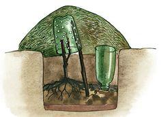 Garden Art, Garden Plants, House Plants, Garden Tools, Farm Gardens, Outdoor Gardens, Vegetative Reproduction, Summer House Garden, Growing Grapes