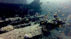 Sheikh Coast Diving & Kiting Center Sheikh Coast Wreck Day -- Milion Hope @ Agia Varvara Splendida giornata !!! 2 Relitti e Specialità Wreck PADI !!! — con Maurizio Ridolfo, Gianluca Danese e Massimo Artioli