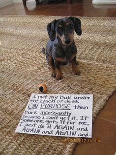 """I put my ball under the couch or des ON PURPOSE then bark INCESSANTLY because I can't get it. If someone gets it for me, I just do it AGAIN and AGAIN and AGAIN and..."" ~ Dog Shaming shame - Dauschound"