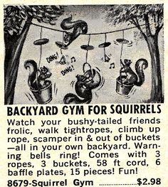 Vintage ad for Squirrel gym. Because these lazy squirrels need some extra training.