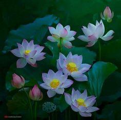 Rosas bellas//