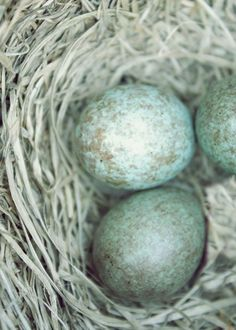 1000 images about duck egg blue on pinterest a well