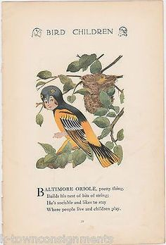 BALTIMORE ORIOLE & LARK VINTAGE BIRD CHILDREN GRAPHIC ILLUSTRATION POETRY PRINT
