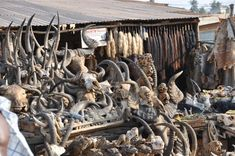 The Akodessewa Fetish Market, in Lome, Togo, known as the world's largest voodoo market is an exotic African tourist attraction Lets Get Weird, Voodoo Hoodoo, Scary Places, Travel And Tourism, Creepy, Earth, Marketing, World, Wild West