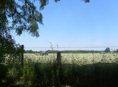 Ernte im Münsterland