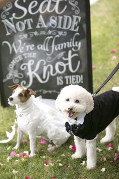 Prepare for woof nuptials. Browse PetSmart's wedding guide for four-legged ceremony inspiration.