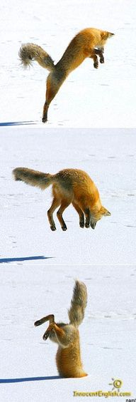 This makes me think of the fox from Milo  Otis and how silly he sounds : P