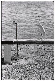 Elliott Erwitt. Florida Keys, USA, 1968
