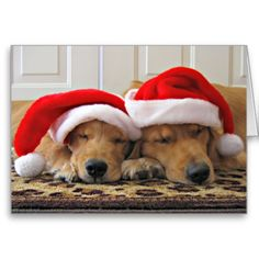 Golden Retriever Christmas Dreams Card by #AugieDoggyStore.  SOLD 20 copies to a customer in Midland, TX :)