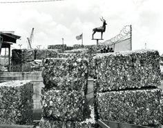 Cans with Flag and Ram, Miami, Florida, 2001