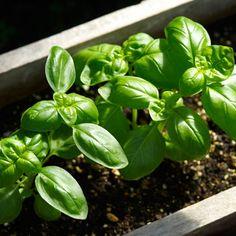 Zone by zone to-do list for gardeners in April: Organic Gardening
