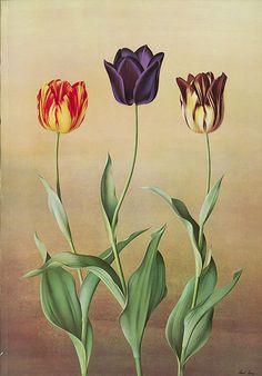 Paul Jones Flora Magnifica i Flora Superba botaniczny wydruki