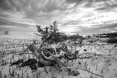 Long Island Bahamas derekford.com