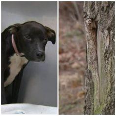 Good Samaritan rescues dog found frozen to the ground