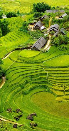 Rice fields on terraced Mu Cang Chai, YenBai, Vietnam.