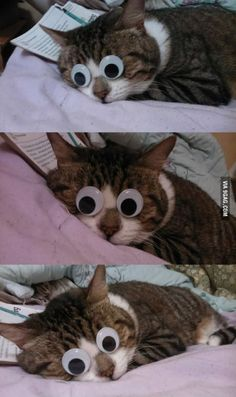 Googly eyes on my cat when it was sleeping. . . #9gag #funny