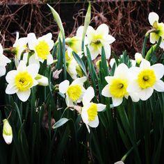 Spring has sprung at Shirley Plantation! www.shirleyplantation.com