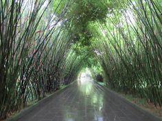 Bamboo frames a corridor in Wangjianglou Park next to a bend of the Jinjiang River in Chengdu, Sichuan, China. Sichuan China, Chengdu, Corridor, Bamboo, Frames, Country Roads, River, Park, Frame