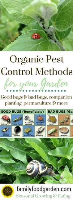Organic Pest Control in your Garden ~Family Food Garden #InterestingThings #organicgardening